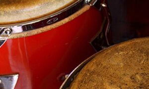 Latin Percussion by Ableton
